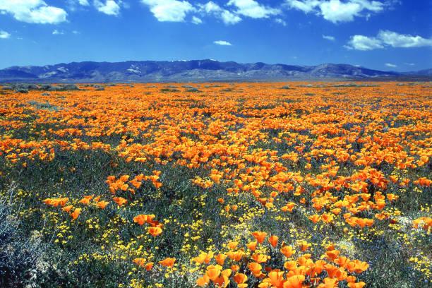antelope valley california poppy reserve state natural reserve west of lancaster california - заповедник дикой природы стоковые фото и изображения