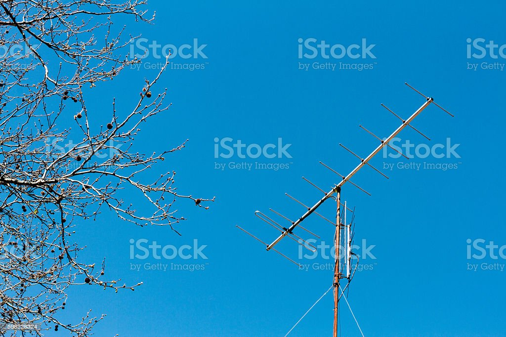 TV antenna with tree branches on blue sky background foto royalty-free