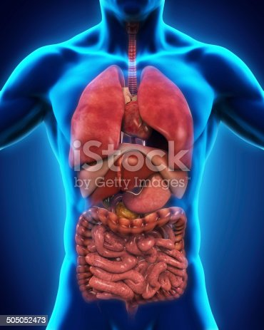 istock Anterior View of Human Body 505052473