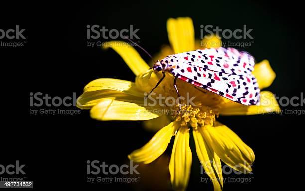 Anthemis tinctoriadaisybutteerflymacro detailflower picture id492734532?b=1&k=6&m=492734532&s=612x612&h= f0kb8p6sjmyjvhq0x1 fs 5ixen0s5teayimtchwwo=