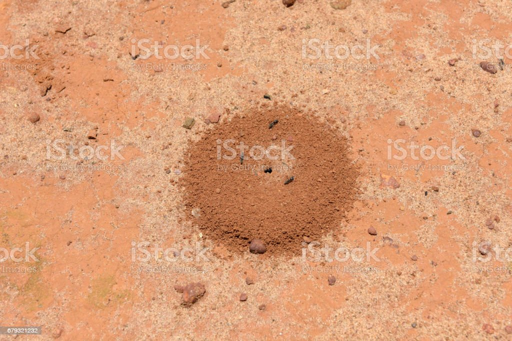 Anthill in Rwanda stock photo
