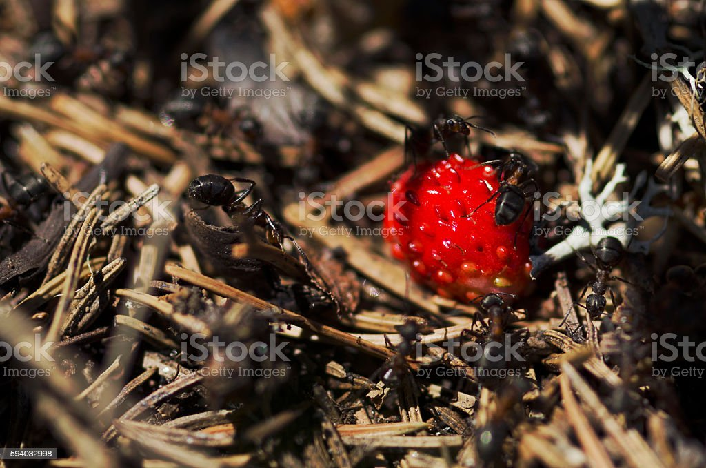 Anthill in the forest stock photo