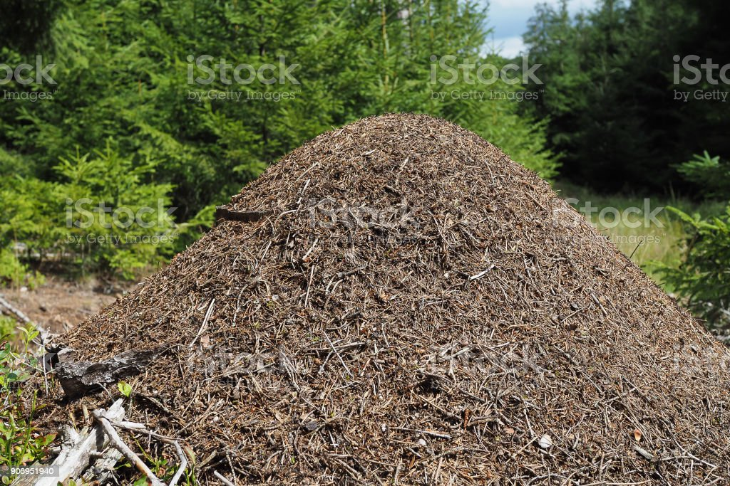 anthill, Formica rufa stock photo