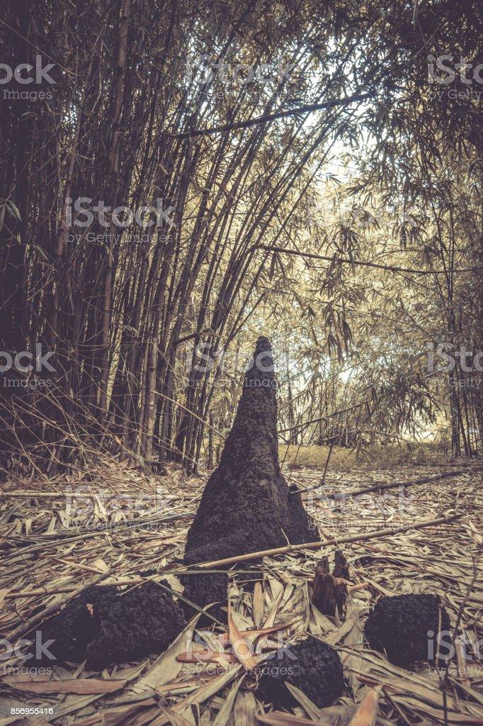 Anthills and bamboos at Waeruwan Garden,Phutthamonthon,Nakhon Pathom,Thailand stock photo