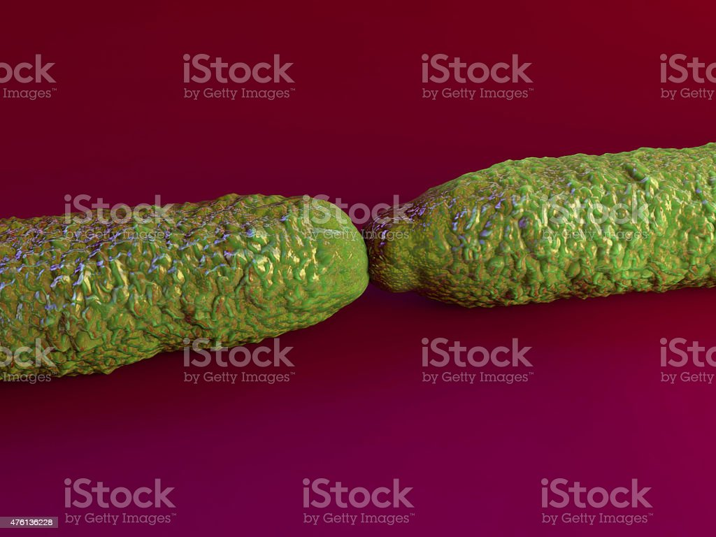 Anthrax bacteria stock photo