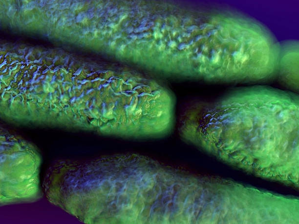 antrace batteri  - antrace foto e immagini stock
