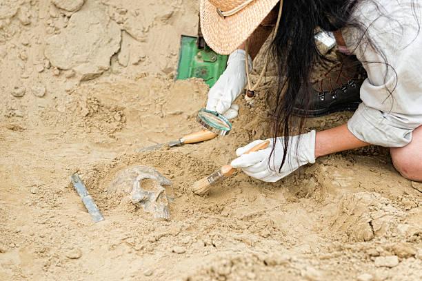 Anthropology - unearthing human skull stock photo