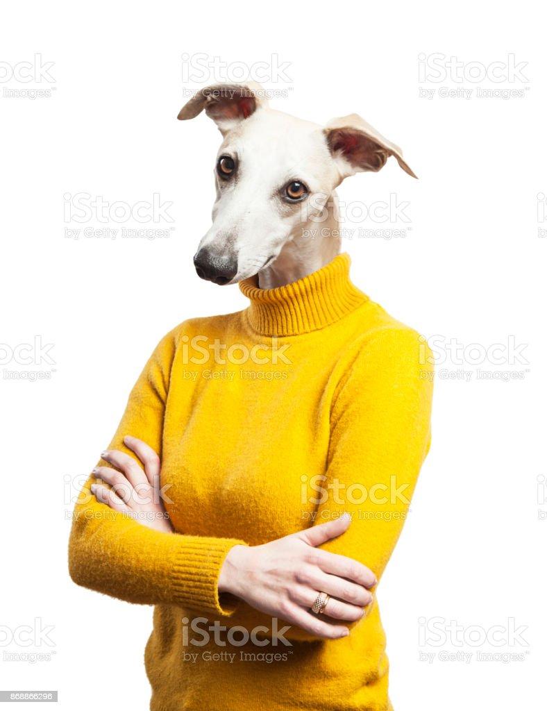 anthropomorphic dog portrait. woman body with grayhound's head stock photo