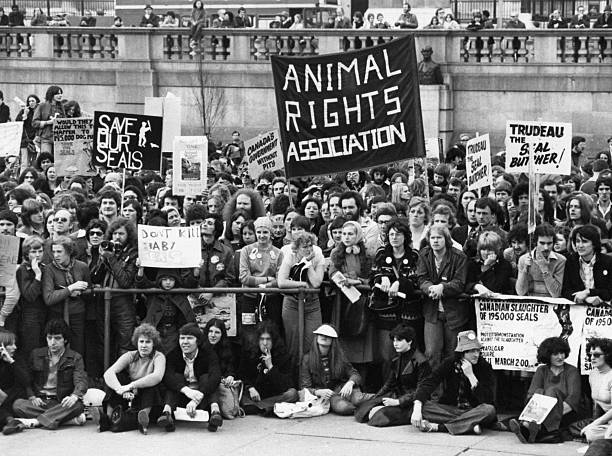 Anti seal hunting demonstration stock photo
