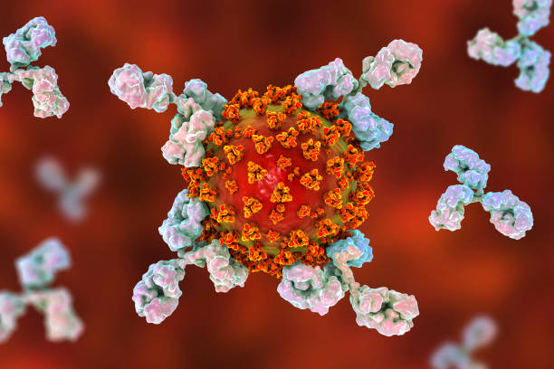 Antibodies attacking SARS-CoV-2 virus stock photo