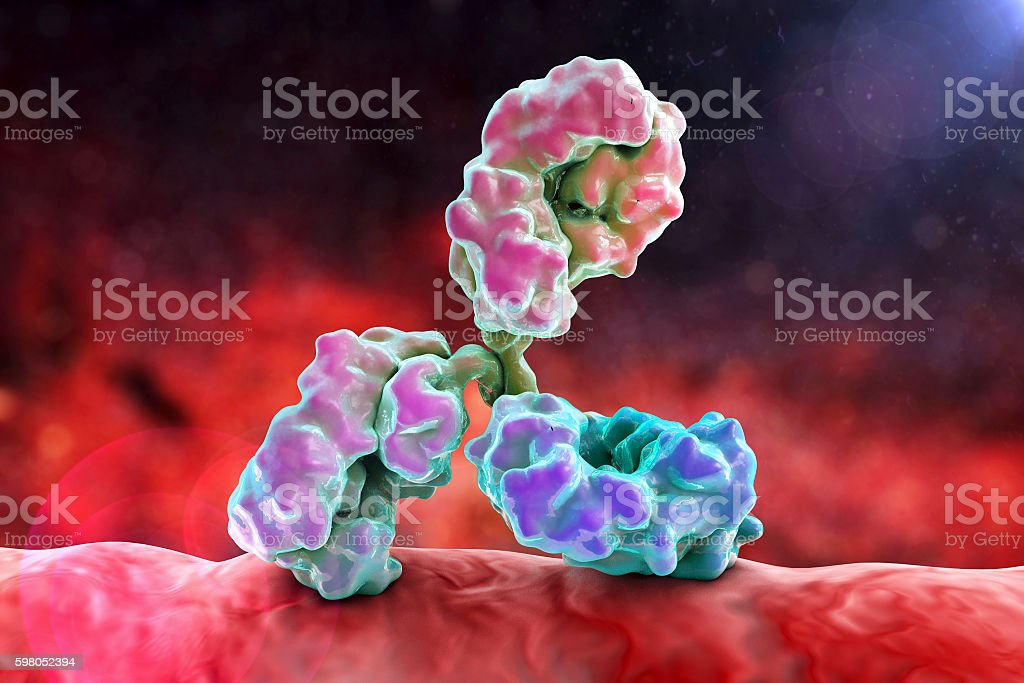 Antibody attacking bacterium stock photo