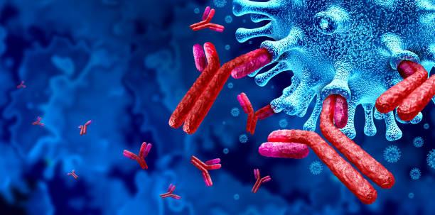 Antibody  Immune System stock photo