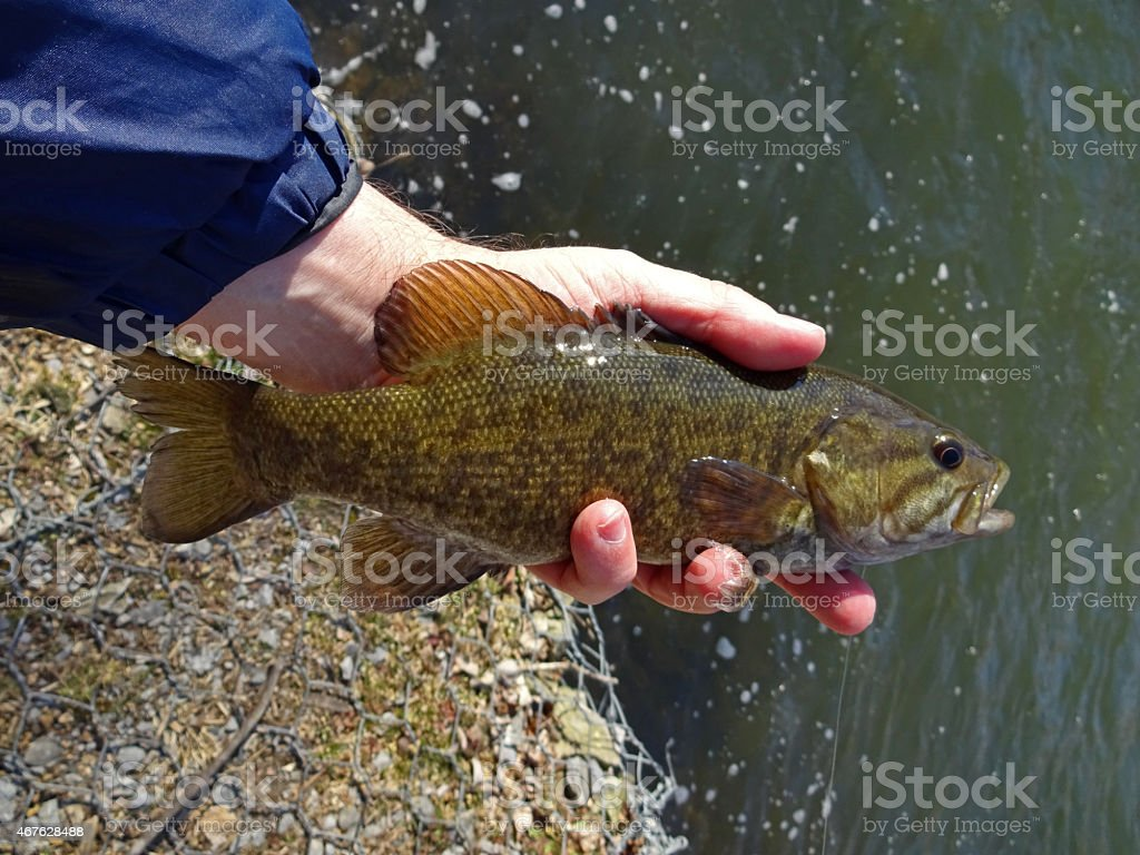 Antietam Creek Smallmouth stock photo