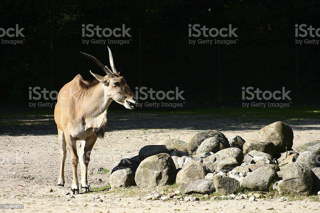 Antelope Valley Poppy Reserve Lizenzfreies stock-foto