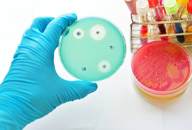 Antimicrobial susceptibility testing Antimicrobial susceptibility testing in petri dish antibiotic resistant stock pictures, royalty-free photos & images