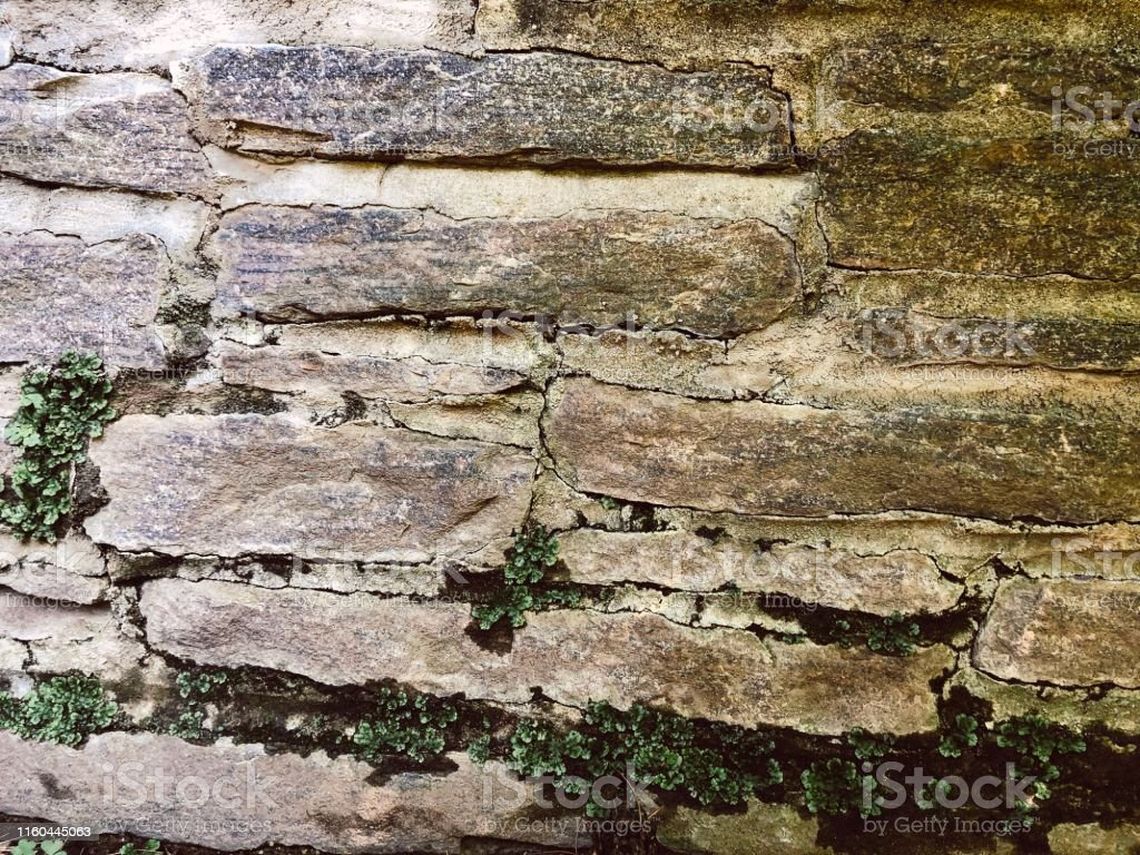 Antique 1920s Tudor mansion and garden stone wall with creeping green...