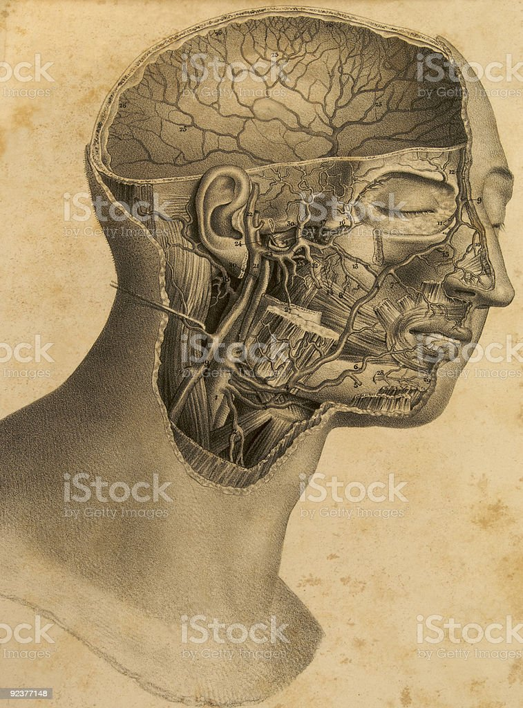 Antique anatomy plate of human head royalty-free stock photo