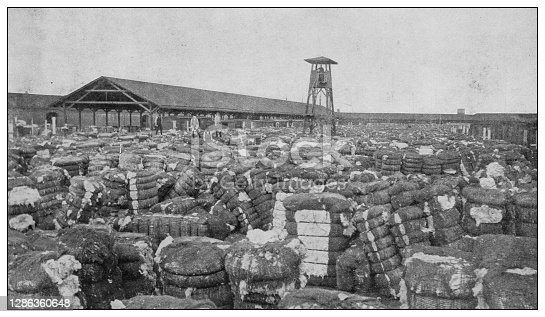 Antique black and white photo of the United States: Cotton industry