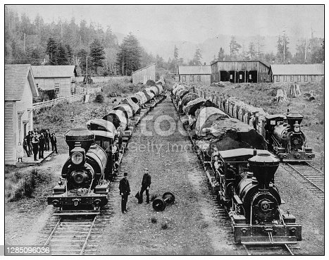 Antique black and white photo of the United States: Trains loaded with Giant Sequoia tree trunks near Yosemite