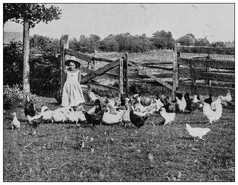 Antique black and white photo: Summer days, little girl with chickens