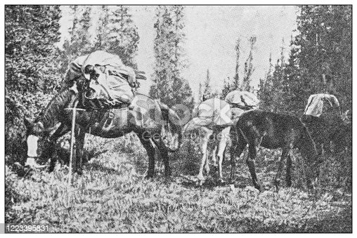 658114236 istock photo Antique black and white photograph of sport, athletes and leisure activities in the 19th century: Bighorn hunting in Canada, Rocky mountains 1223395831