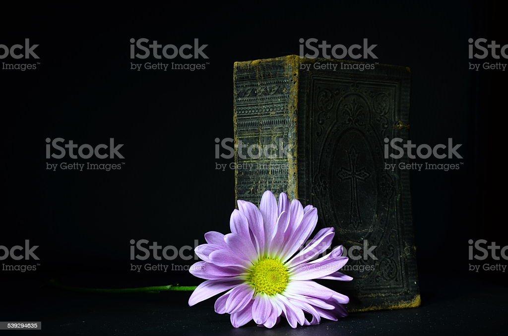 Antique Book & Flower stock photo