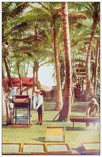 Antique color photograph: Kauai Island, Hawaii