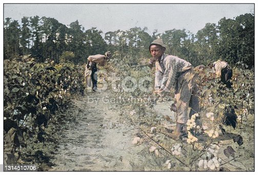 istock Antique colorized photo of the United States: Picking cotton 1314510706