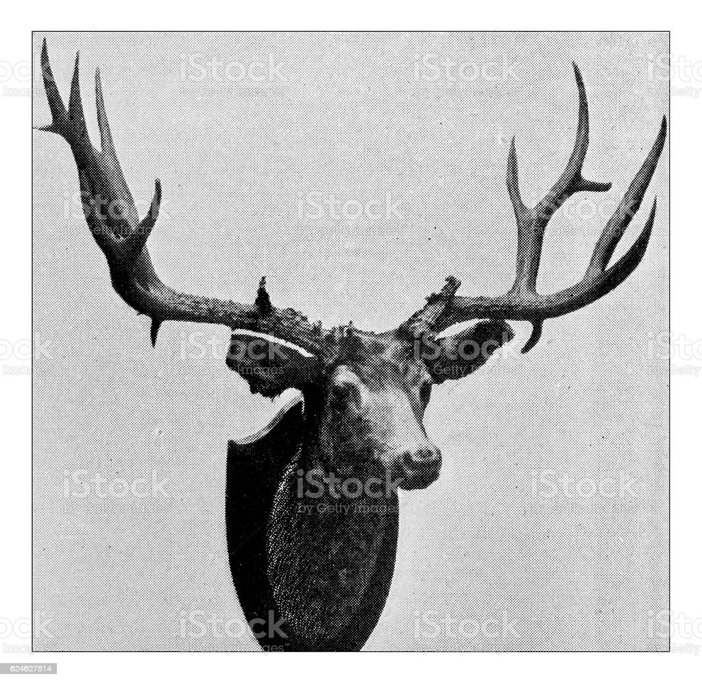 Antique dotprinted photograph of Hobbies and Sports: Deer head stock photo