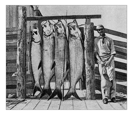 Antique dotprinted photograph of Hobbies and Sports: Tarpon fishing
