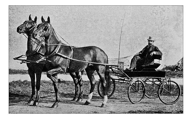 Antique dotprinted photograph of Hobbies and Sports: Trotting horse cart Antique dotprinted photograph of Hobbies and Sports: Trotting horse cart 19th century stock pictures, royalty-free photos & images