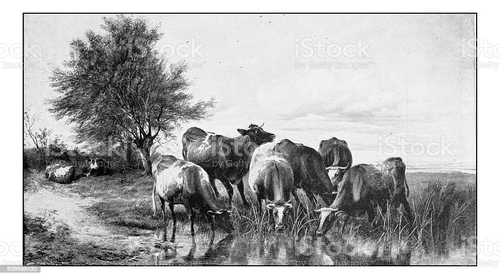 Antique dotprinted photograph of painting: Cows stock photo