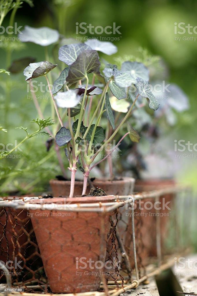 Antique garden royalty-free stock photo