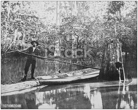 Antique historical photographs from the US Navy and Army: Cypress Swamp