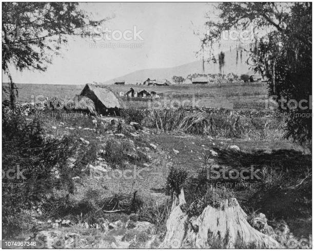 Antique historical photographs from the US Navy and Army: Farm Scene, Philippines