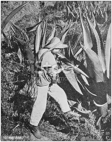 Antique historical photographs from the US Navy and Army: Mexican Pulque Gatherer