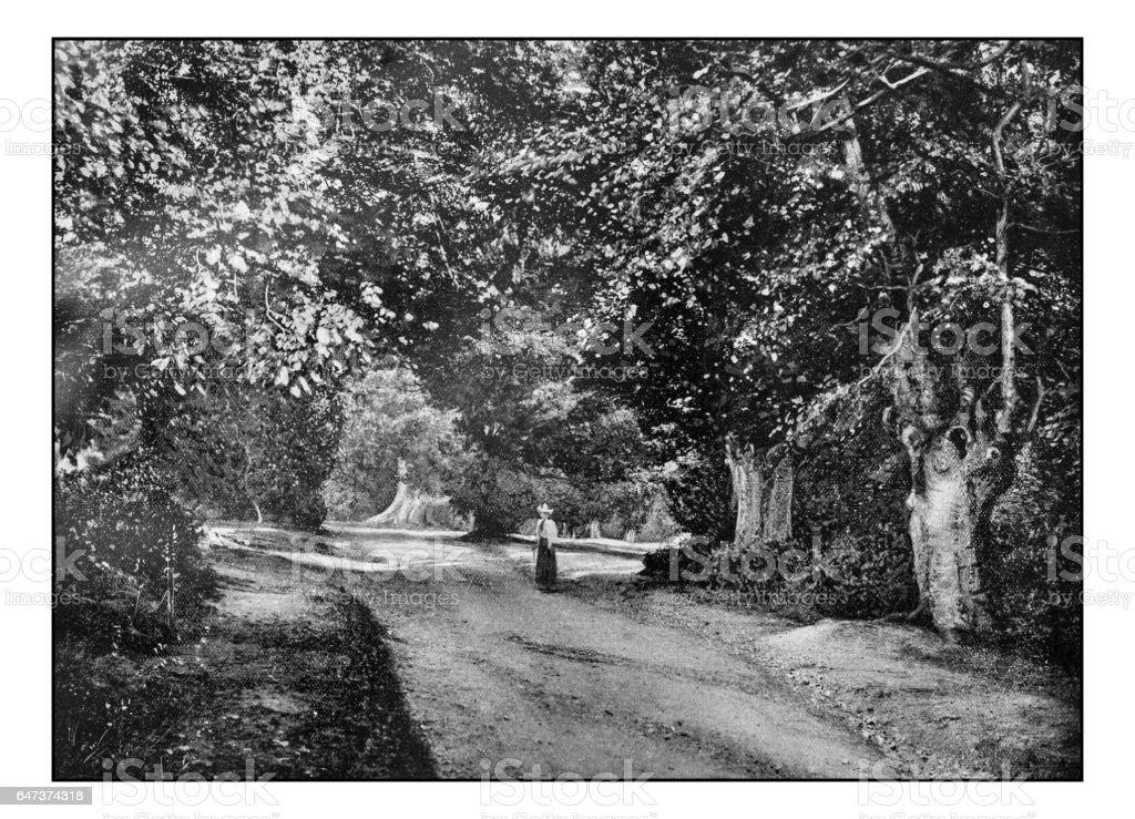 Antique London's photographs: Burnham Beeches stock photo