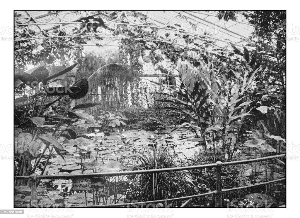 Antique London's photographs: Waterlily house, Kew gardens stock photo