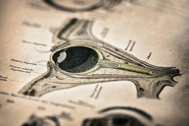 antique medical book: eye - anatomie buch stock-fotos und bilder