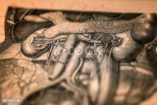 istock Antique medical book: Kidneys 637943128