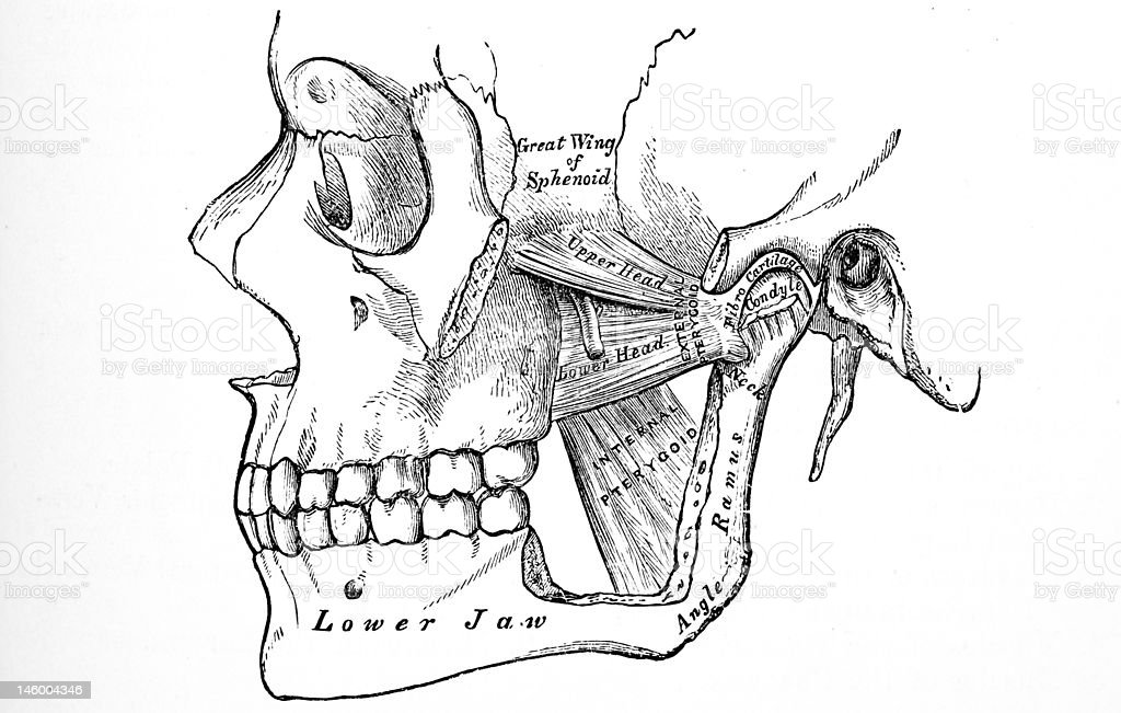 Antique Medical Illustrations Human Jaw Stock Photo More Pictures