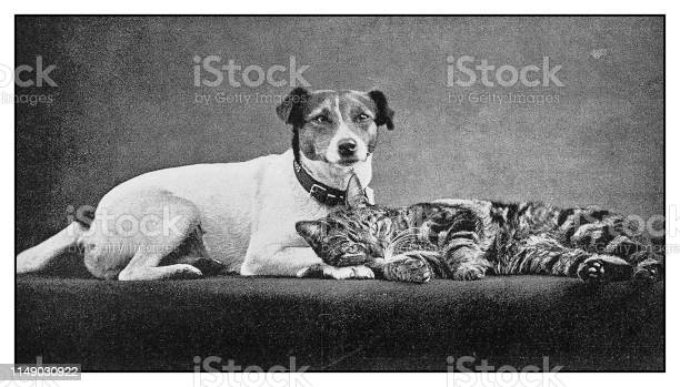 Antique photo cat and dog picture id1149030922?b=1&k=6&m=1149030922&s=612x612&h=gk36mzs10c9g4du7vn7wg9vqfqcic7nftrjv9o rhs4=