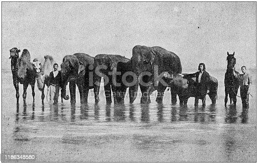 Antique photo: Circus animals