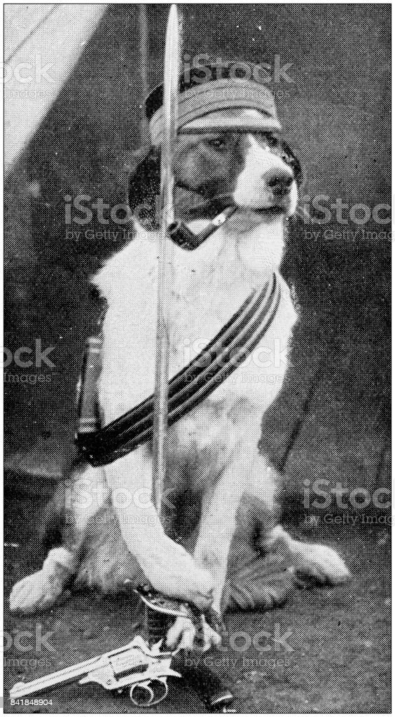 Antique photo: Dog with sword and gun stock photo