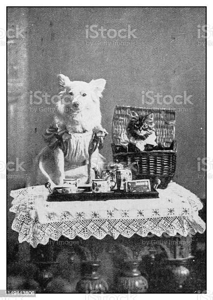 Antique photo dressed dog and cat portrait picture id1149443806?b=1&k=6&m=1149443806&s=612x612&h=zerkaaigo0ydfgcypkrisctkypwhglmuaz4cvbsoa1q=