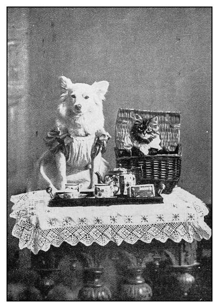 Antique photo dressed dog and cat portrait picture id1149443806?b=1&k=6&m=1149443806&s=612x612&w=0&h=jxcvytqtcxreeh0nrcygutpxo9ut42nxhae gjycxyi=