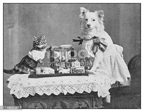 Antique photo: dressed dog and cat portrait