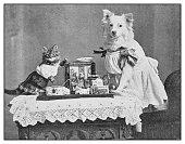 Antique photo: dressed dog and cat portrait