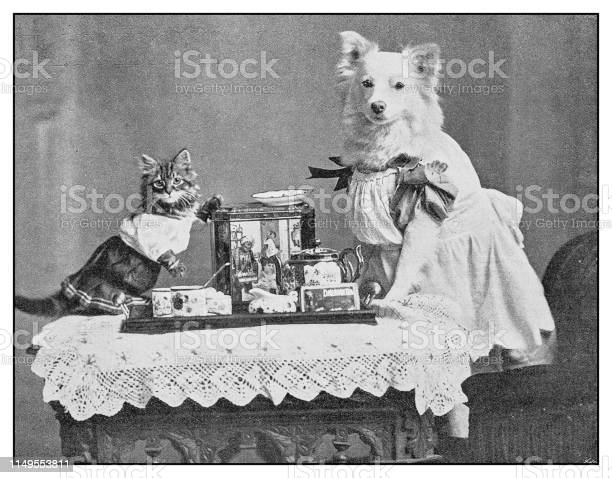 Antique photo dressed dog and cat portrait picture id1149553811?b=1&k=6&m=1149553811&s=612x612&h=gzadiymhqb4yobn9jokniygy0zblmbwzzt7xc 0srre=