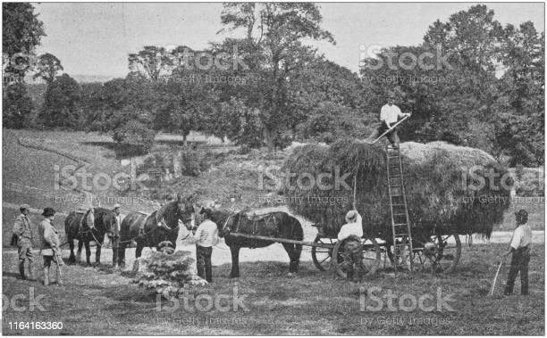 Antique photo hay harvesting picture id1164163360?b=1&k=6&m=1164163360&s=612x612&h=1bk424xslkqthwqhkwml22si3hwpb f4lem2yj9srn8=
